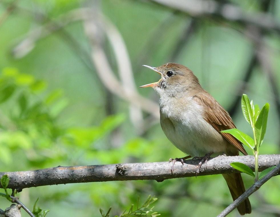 Птицы казахстана фото и названия
